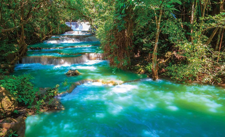 Waterfalls Trees Forest Nature Fototapet