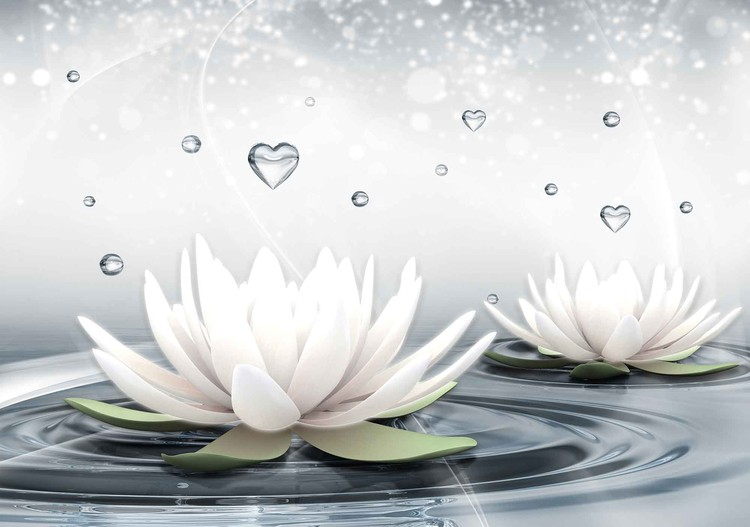 White Lotus Drops Hearts Water Fototapet