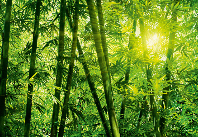 BAMBOO FOREST Fali tapéta