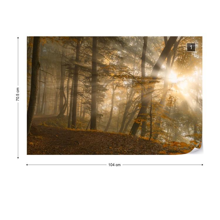 Forest Light Tapéta, Fotótapéta