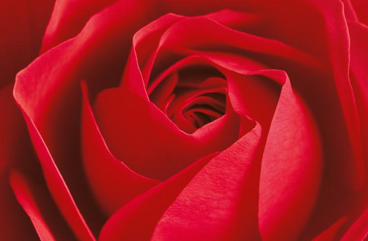 L´IMPORTANT C´EST LA ROSE Fali tapéta