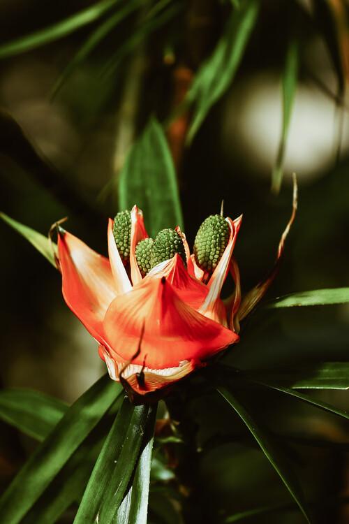 Orange Flower Tapéta, Fotótapéta