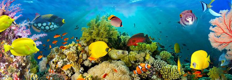 Sea Corals  Fali tapéta