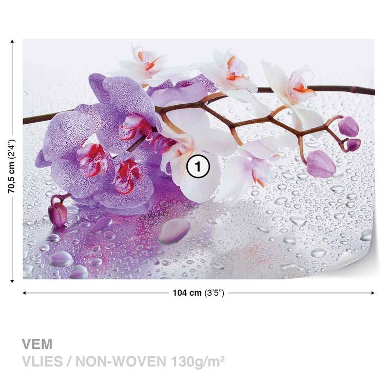 Flowers Orchids Nature Drops Fototapeta