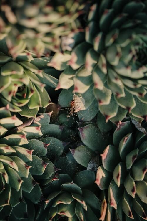 Garden cactus leaves Fototapeta