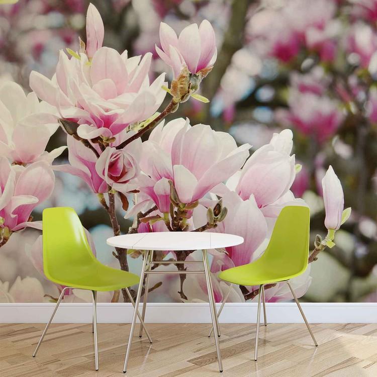 Magnolia Flowers Fototapeta