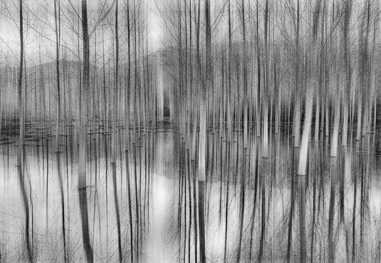 Reflections Fototapeta