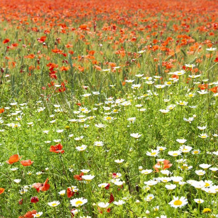 Spring Flowers Fototapeta