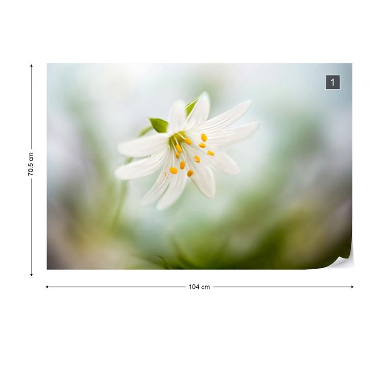 Spring Stitchwort Fototapeta