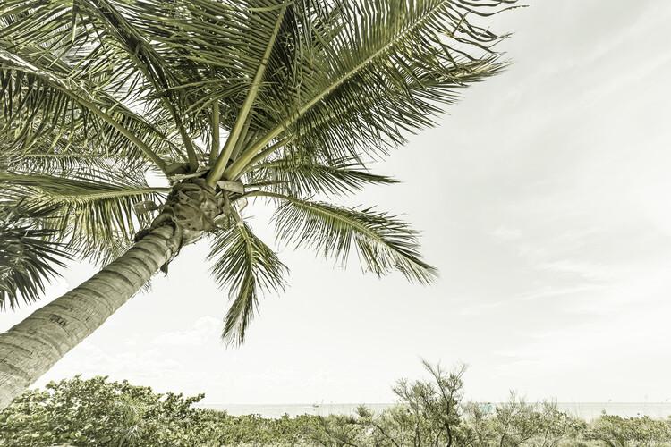 Summertime in Florida | Vintage Fototapeta