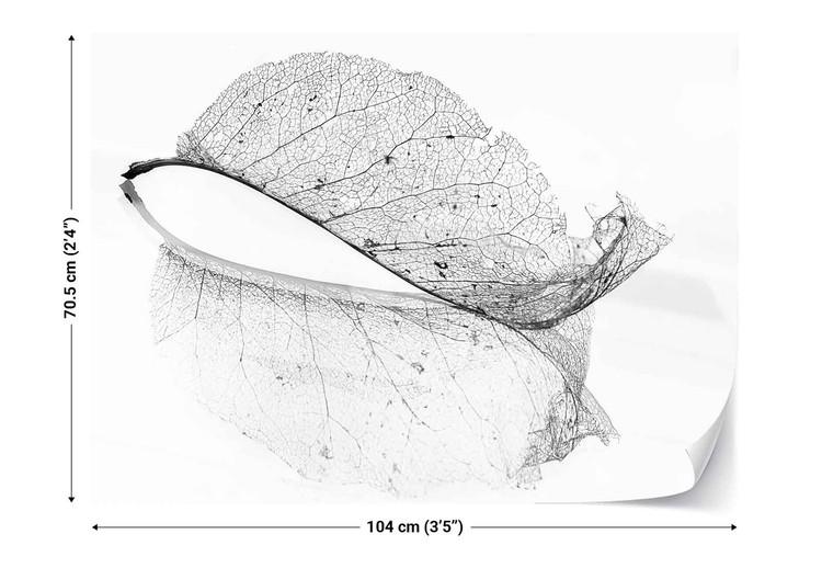 The Old Leaf Fototapeta