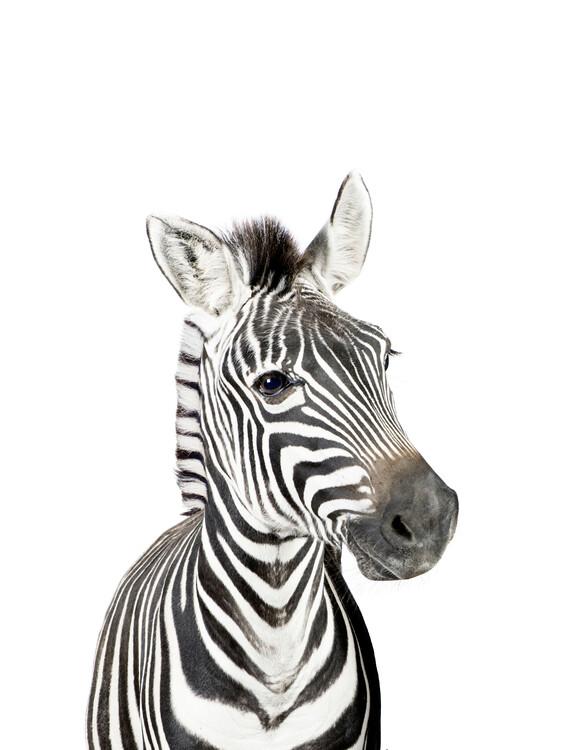 Baby Zebra Fototapete