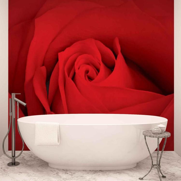 Blume Rose Natur Fototapete