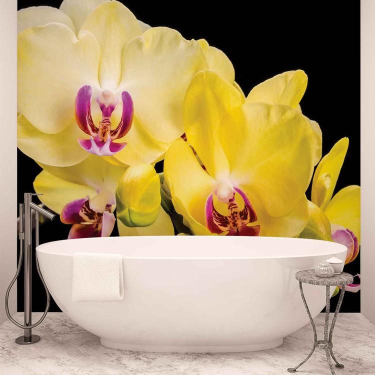 Blumen Orchideen Natur Fototapete