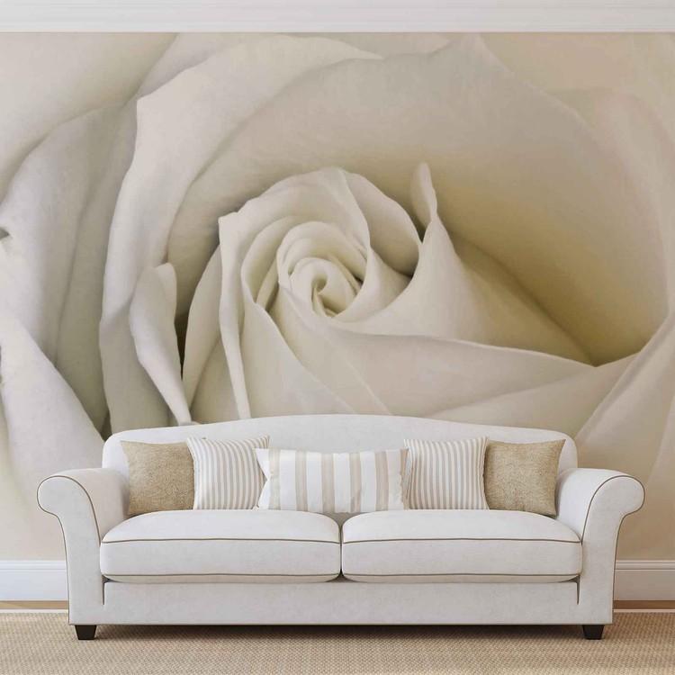Blumen Rose Weiß Natur Fototapete