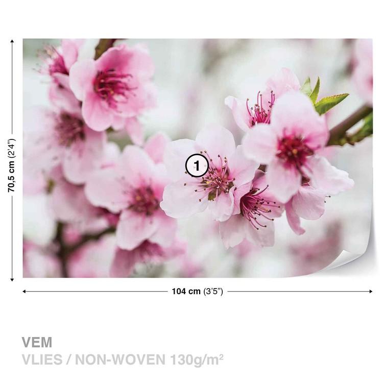 kirschblüte englisch