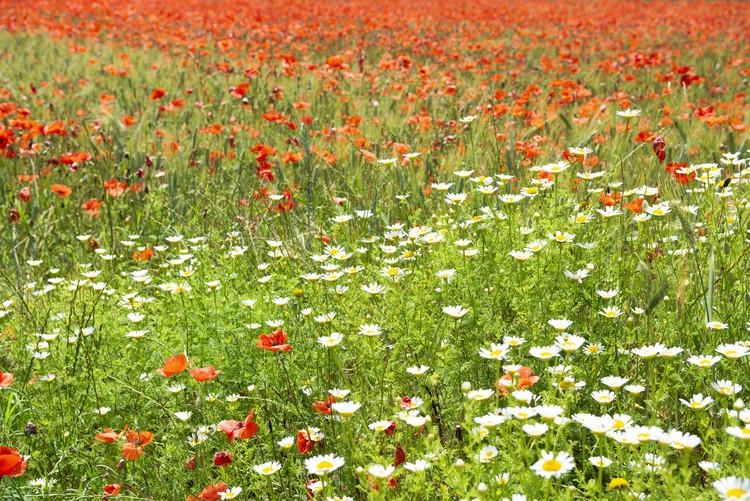 Spring Flowers Fototapete