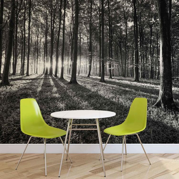 Wald Bäume Licht Strahl Natur Fototapete