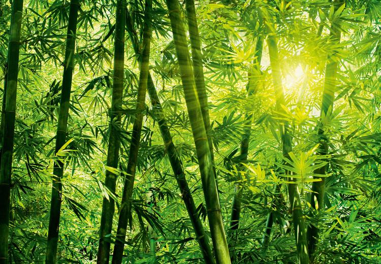BAMBOO FOREST Fototapet