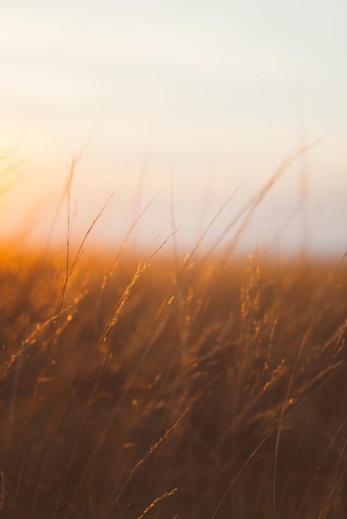 Last sunrays over the dry plants Fototapet