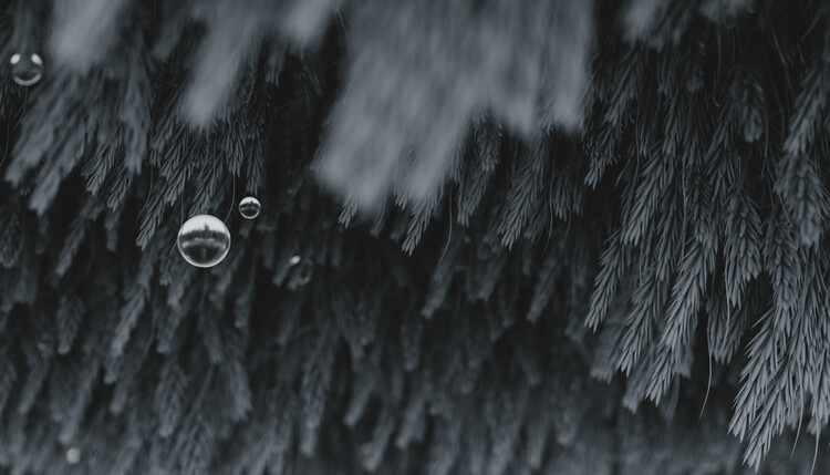 Minimal interior with blue plants and water spheres on the top series 6 Fototapet
