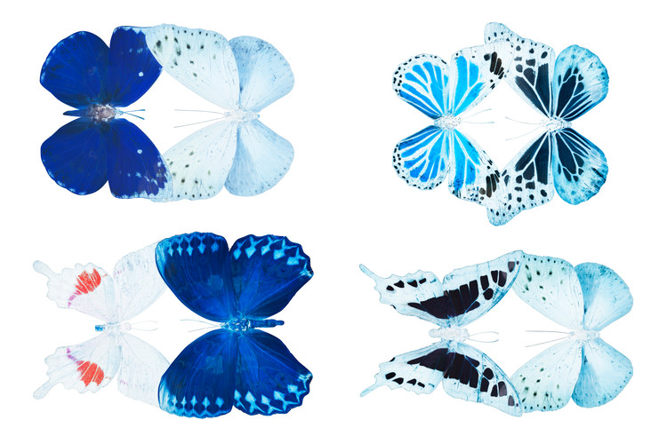 MISS BUTTERFLY X-RAY DUO White Fototapet