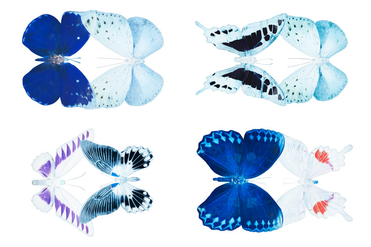 MISS BUTTERFLY X-RAY DUO White IV Fototapet