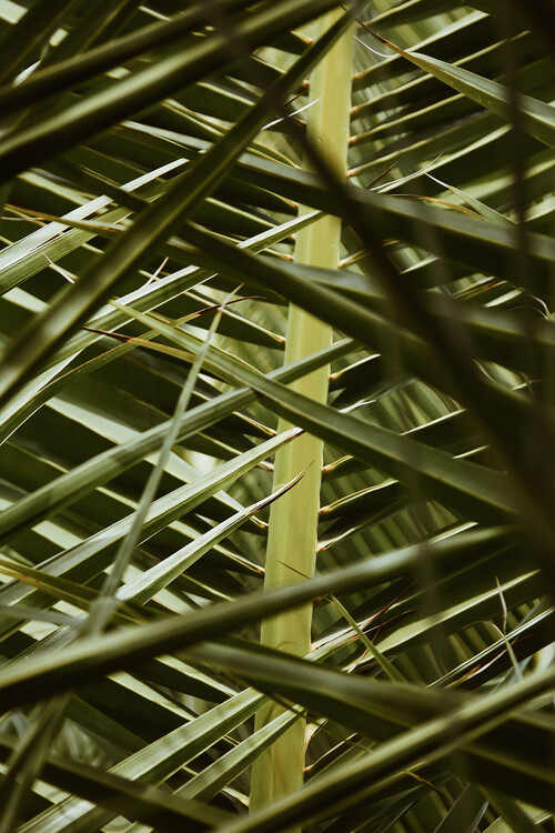 Palms in disguise Fototapet