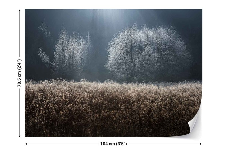 Winter Field Fototapet