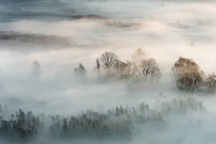 Winter fog Fototapet