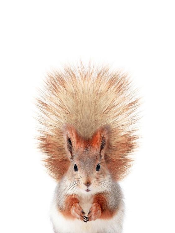 Baby Squirrel Fototapeta