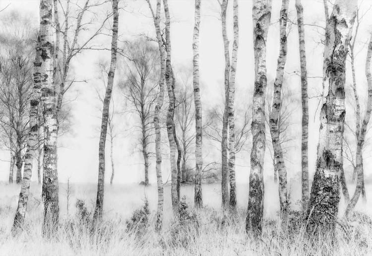 Fototapeta Black And White
