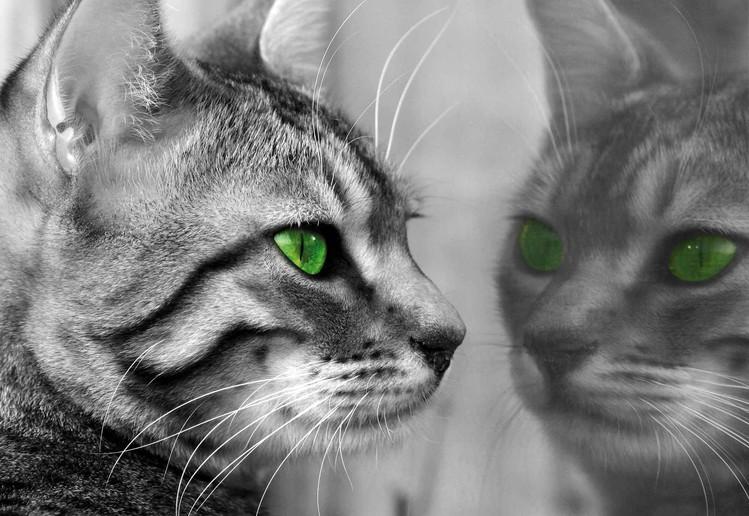 Fototapeta Cat Kitten