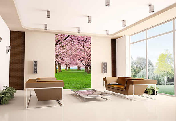 Fototapeta CHERRY TREES