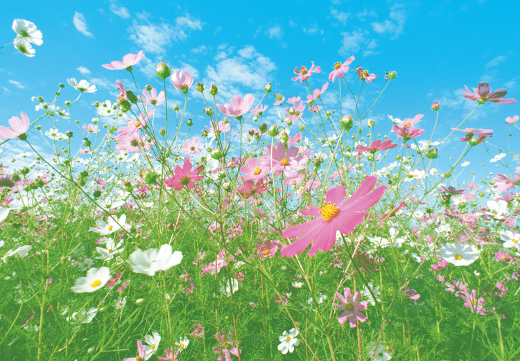 Fototapeta FLOWER MEADOW