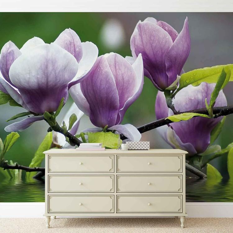 Fototapeta Flowers Magnolia Water
