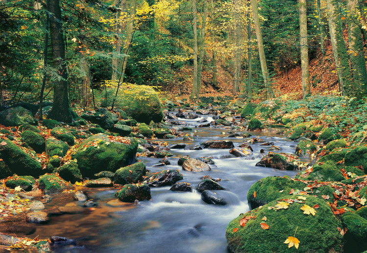 FOREST STREAM Fototapeta