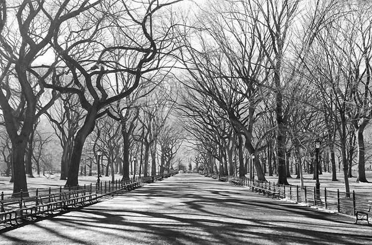 Fototapeta HENRI SILBERMAN - poet's walk