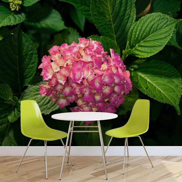 Fototapeta  Květiny - Růžová hortenzie