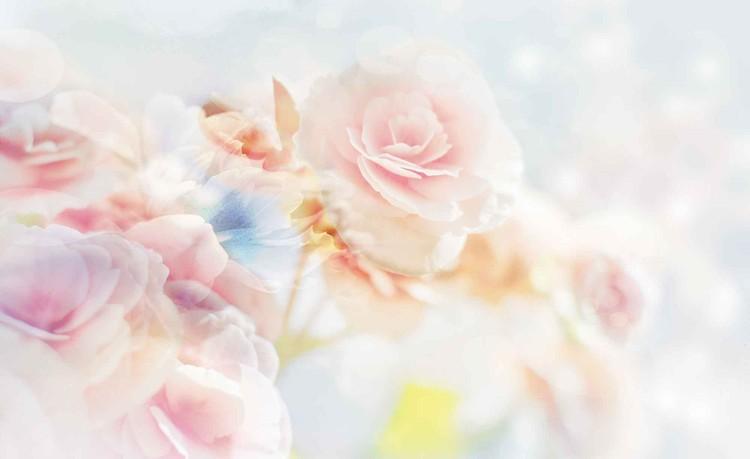 Fototapeta  Květy, růže, pastelové barvy