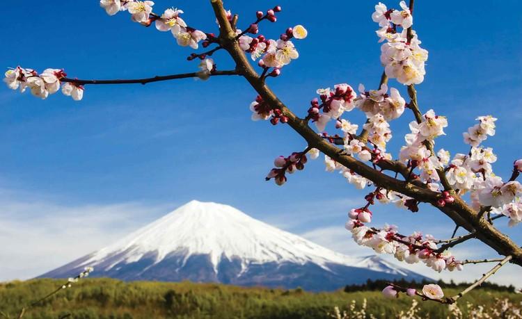 Kwiaty Góra Śnieg Natura Fototapeta