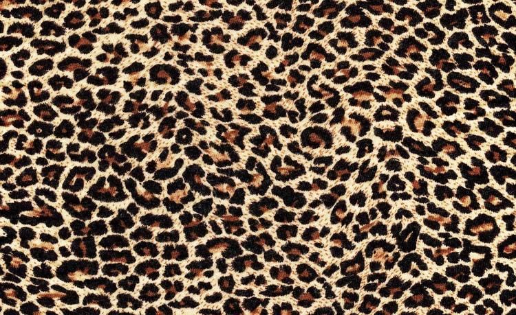Fototapeta Leopard