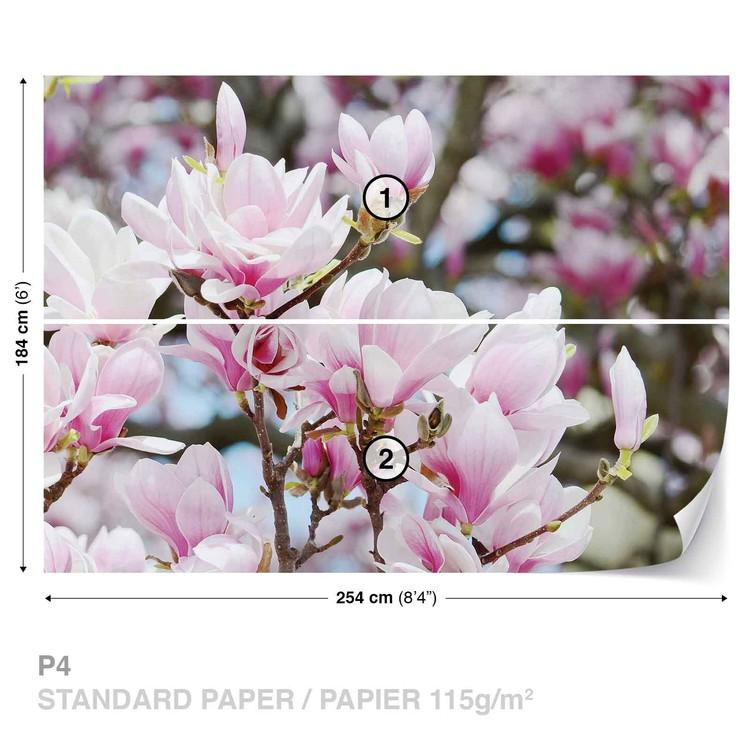 Fototapeta  Magnolie květy