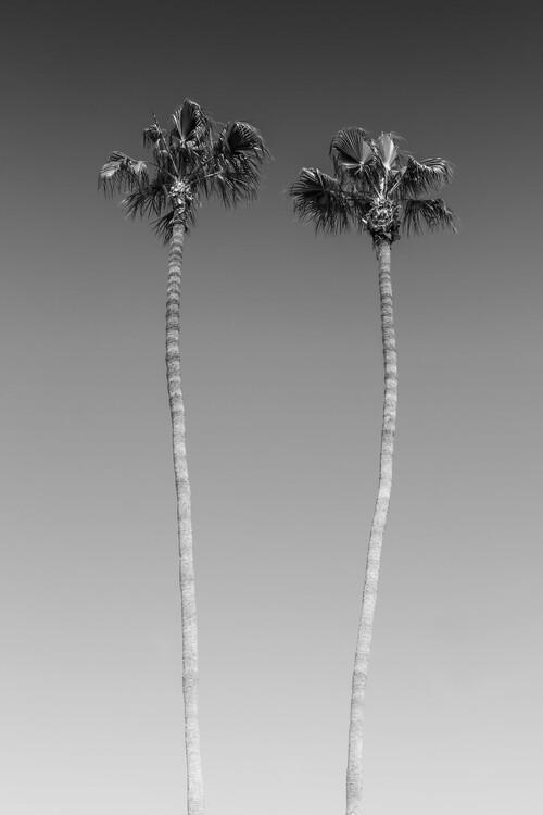 Fototapeta Palm Trees In Black & White