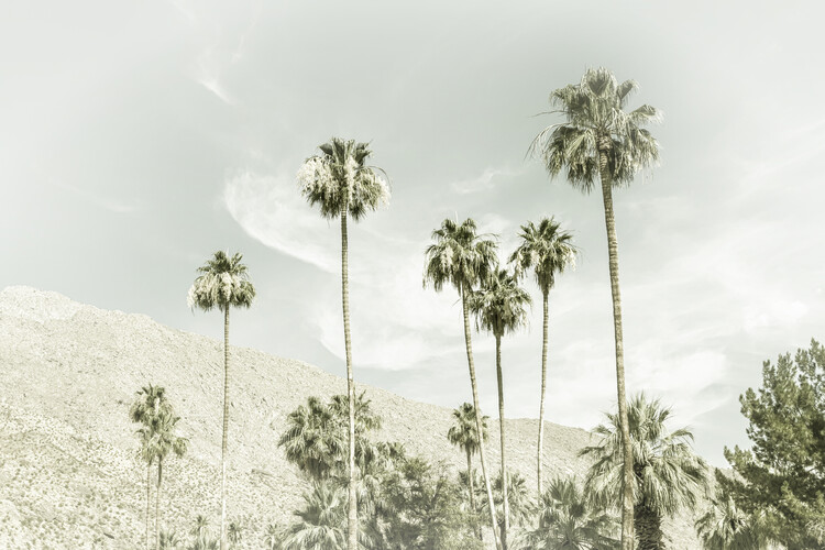 Palm Trees in the desert | Vintage Fototapeta
