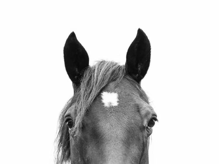 Fototapeta Peeking Horse
