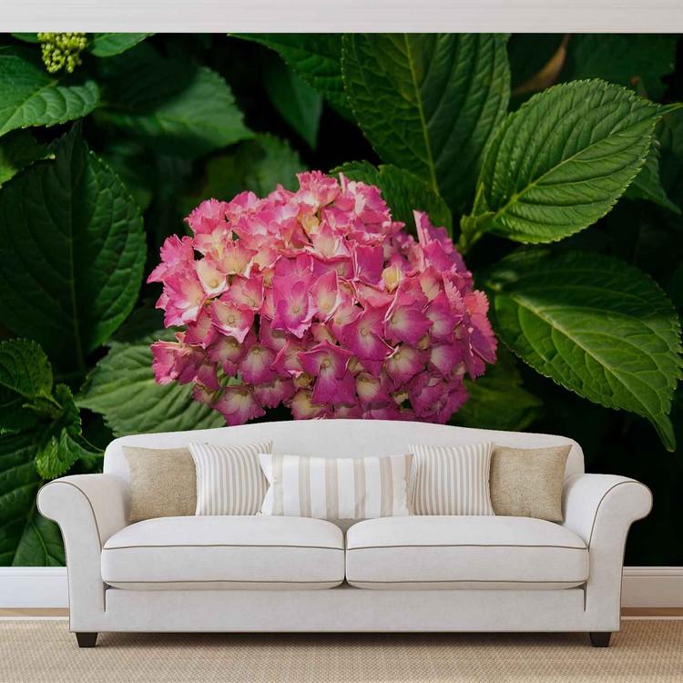 Różowe hortensje Fototapeta