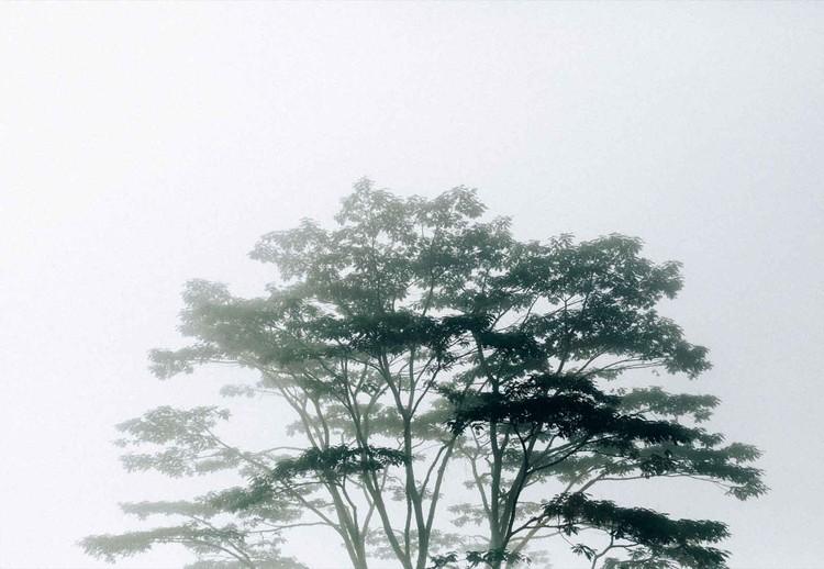 Fototapeta  Timor-Leste