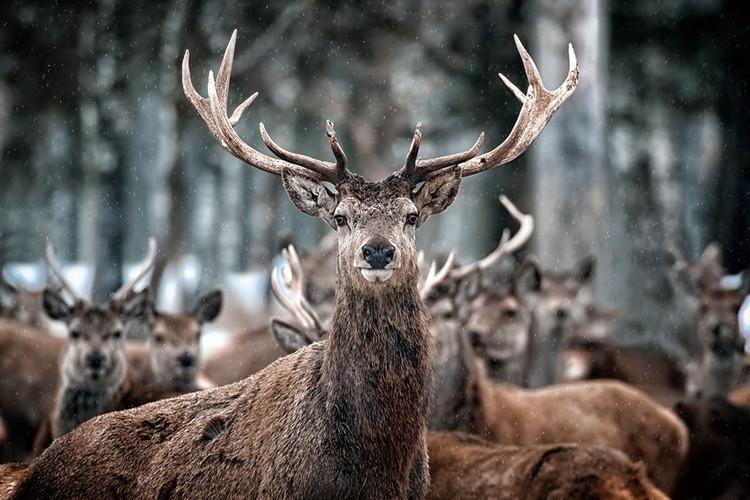 Glasbilder Deer - What's Up?