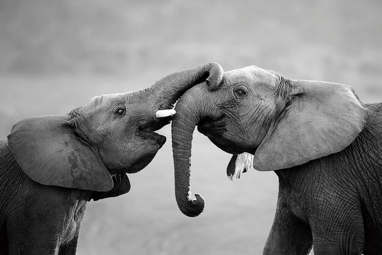 Glasbilder Elephant - Friends